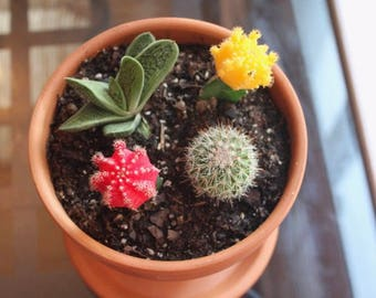 Handmade Hanging Succulent Planter - Pottery - Garden - Hanging Plants - Life