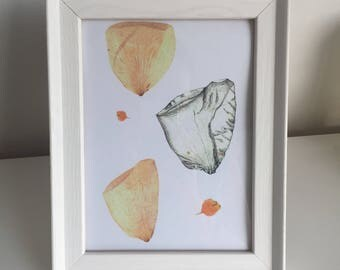 White rose petals illustration and pressed flower print
