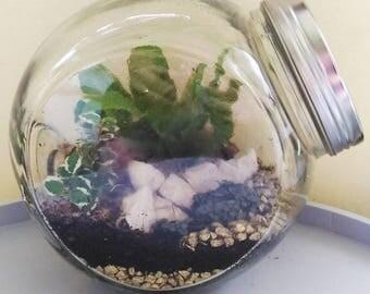 Tropical terrarium in pot toggle clasp and aluminum Cap