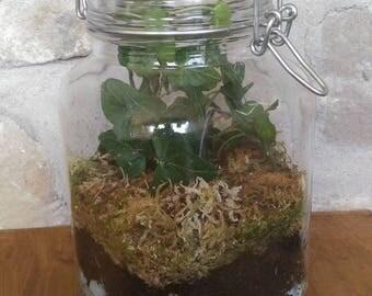Ivy in a clear jar terrarium