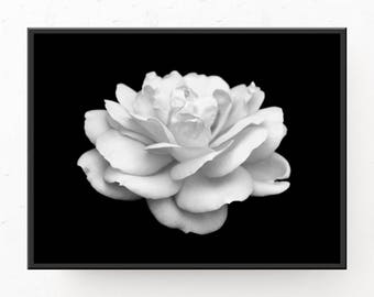 Modern White Rose - Black and White Print, Digital Art Print, Printable Wall Art, Modern Home Decor, Rose Photo, Modern Flower Print, Poster