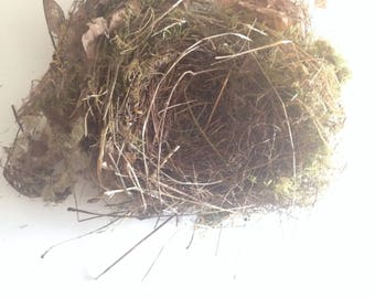 Small Songbird's Nest