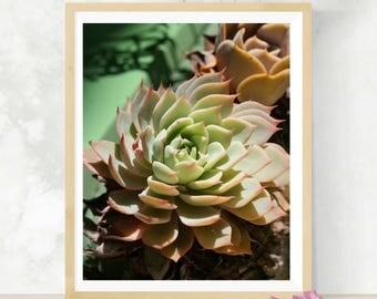 Cactus Photography   Botanical Art Print   Succulent Artwork   Nature Photography   Garden Nursery Decor   Newlywed Gift   Minimalist Decor