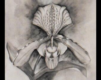 Drawing of a venus pencil graphitte hoof