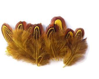 Yellow pheasant feathers