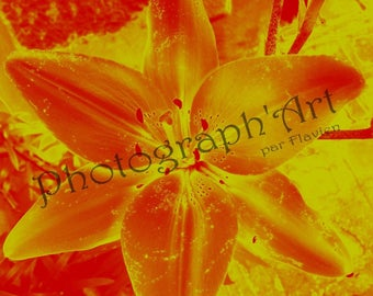 Flamboyant art - Lily photography: 30 x 30