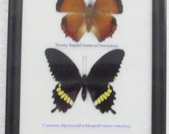 REAL 4 Frame Butterfly Wall Hanging Collection Taxidermy In framed / B04E