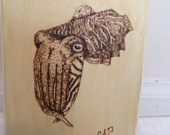 Cuttlefish rectangular