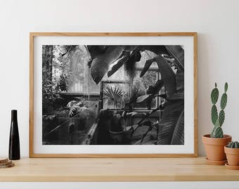 Tropical Plants, Tropical Nature, Botanical Garden, Black and White Photo, Wall Art