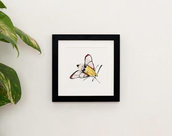Hummingbird Moth illustration