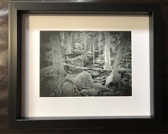 Wall Decor Dinosaur Forest: Black and White Photograph