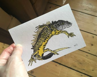 Pack of 3 NEWT greetings card, blank, wildlife, birthday, nature, thankyou, art, great crested newt, recycled card, aquatic, gift