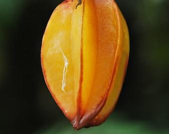 5 Star Fruit