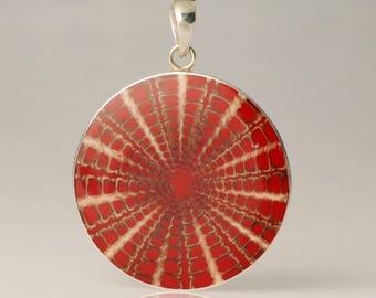 Round Red Sea Urchin