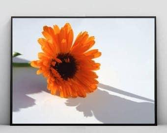 Orange Flower, Photography, Daisy, Nature, Minimalistic, Modern, Decor