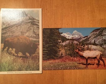 Vintage Banff National Park Wildlife Postcards