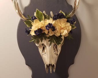 Real deer skull wall art