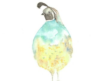 Watercolour print of round Quail bird