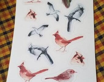 Bird studies stickers