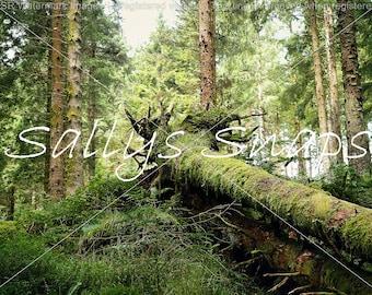Fallen Tree Print
