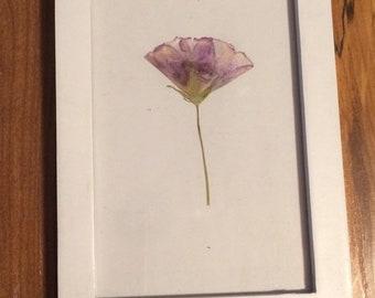 Pressed Poppy-Mallow Flower