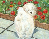 Havanese Dog Poppies Note Card with Envelope