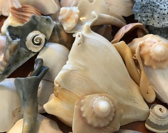 Ocean-Worn Conch Shell Pieces. Mosaic. Wind Chimes. Decor.
