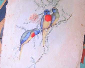 French Antique Bird Illustration, Paper Ephemera, Vintage Budgerigar, Hand Painted, Watercolour Illustration, Foxed Papers,Wall Art, Budgie