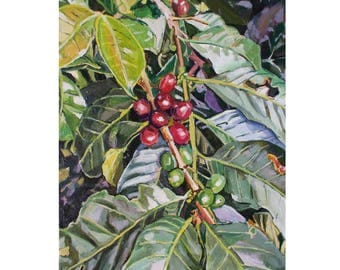 Colombia Coffee Plant Painting Colombian Medellin Concordia  beans  plant botanical Still Life South America  Farm Finca Art Gwen Meyerson