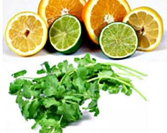 CITRUS CILANTRO Soy Wax TEALiGHTS,Tea Lights,Homemade,Hand Poured,Gifts,Citrus,Cilantro,Herbal,Fresh,Aromatherapy,Refreshing,Envigorating