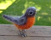 Tiny robin