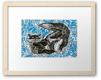 Blue Fox signed print, (medium sized Framed and mounted)