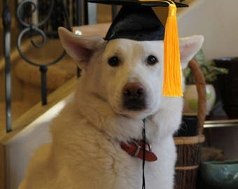 Dog Graduation Cap - Graduation Hat for dogs and cats