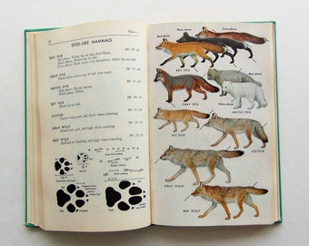 RESERVED 1961 Field Guide To Mammals