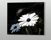 White Daisy Printable Art...
