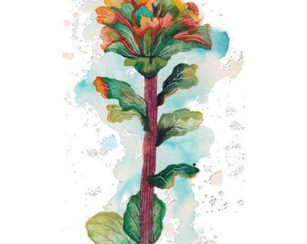 Art Print 8x10 Monterey Paintbrush Botanical
