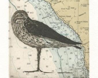 Western Sandpiper on Big Sur chart, Original Etching