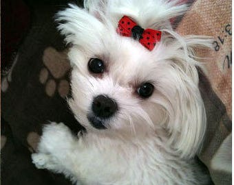 Small Dog Hair Bows, Choose from over 100 colors and Prints, Skinny Dog Hair Bow, Hair Bows for Dogs, Maltese, Yorkie, Shih Tzu, Poodle