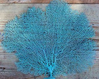 "Natural Dried Sea Fan Coral- 14-17"" Hand painted in ANY color/ Shadowbox Frame Project Coastal Home Decor Floral Arrangement/ Craft Supplies"