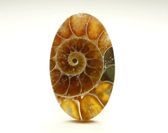 Stunning Small Oval Ammonite Fossil Cabochon Ideal for Ring Settings