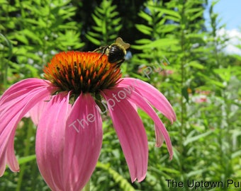 Bee on a Pink Flower Photo Print