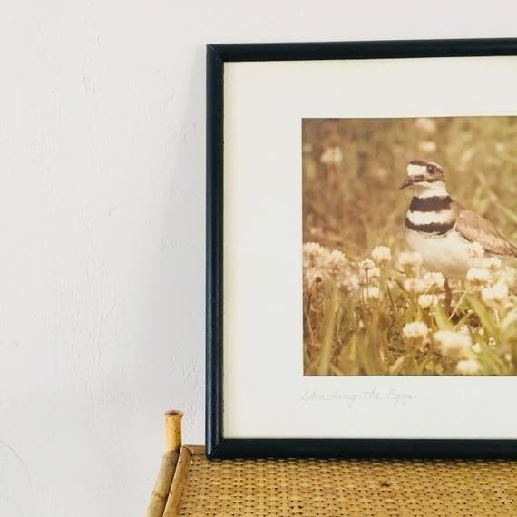 Vintage Bird Photograph Black Framed Bird Photo Earthy Muted Tones Wall Art