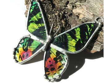 Real Sunset Moth Preserved Butterfly Wing Necklace