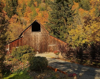 Barn in Autumn Photo, Barn at the Blueberry Farm photo, home decor, Seattle Photo