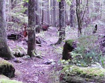 Lost Creek Trail, DIGITAL DOWNLOAD, forest trail decor, forest wall art, hiking path, woodland style, Fine Art Photography by HikingTrails