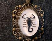 Scorpio Black Scorpion Entomology Dead Insect Bug Specimen in Resin Cameo Bronze Lace Necklace