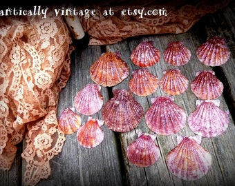 Seashells, Drilled, Handmade, Shimmer,  Beach,  Decor, Crafts, Nautical, Jewelry, Photo Props, Summer
