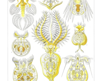 Ernst Haeckel's Vintage Artwork Rotatoria