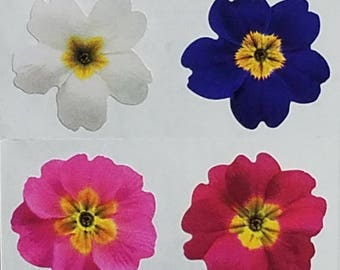 StickyPix Stickers 8 Images Per Sheet Mixed Flowers Scrapbooking