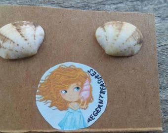 Natural sea shell stud earrings